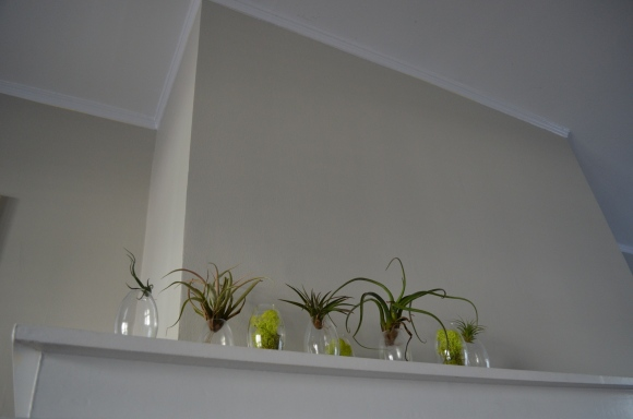 Mantel Air Plant